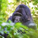 Continual Rwanda Wildlife 4N/5D