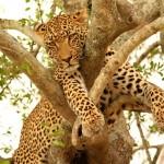 Fantastic Kenya & Tanzania 6N/7D