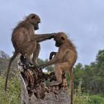 Grand Kenyan Safari 6N/7D