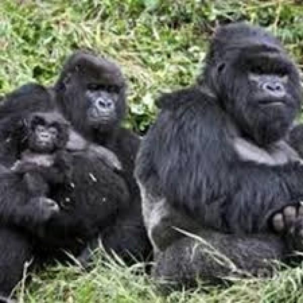 Dreadful Trekking in Rwanda 2N/3D