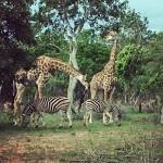 Diverse Uganda 11N/12D