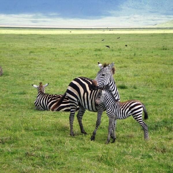 Ruthless Tanzania 6N/7D
