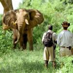 Spectacular Rwanda 7N/8D