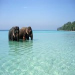 Wonderful Andaman 4N/5D ( 2N Port Blair , 1N Havelock , 1 Neil Isand )