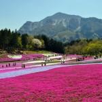 Scenic Japan 6N/7D