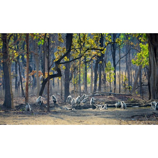 Kanha + Pench National  Park  4N/5D