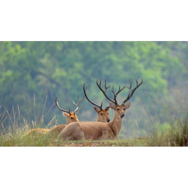 Kanha National Park 2N/3D
