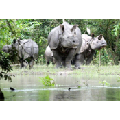 Wildlife Tours (3)