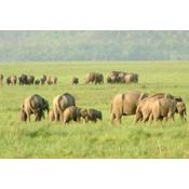Other Wildlife Tours (15)
