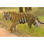 Corbett National Park Jeep Safari Tour 11N/12D