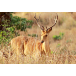 Corbett Wildlife Package 3N/4D