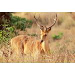 Corbett Wildlife Package 3N/4D