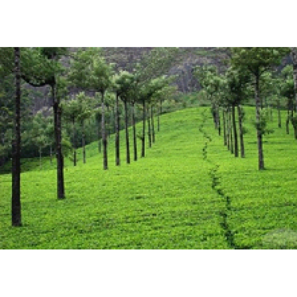Kerala Honeymoon Package 9N/10D