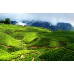 Kerala Honeymoon Package 9N/10D