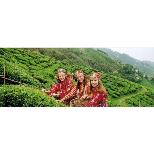Excursion Of Darjeeling 11N/12D