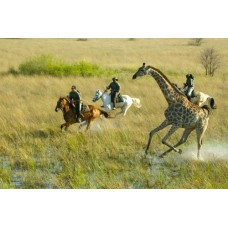 Trail Riding in Shekhawati on Marwari Horses 10N/11D