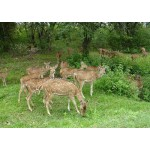 Kashmir with Wildlife Tour Package 4N/5D