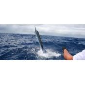 Fishing Tours (4)
