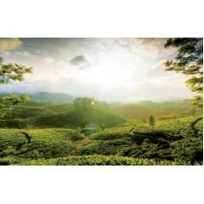 Tremendous Kerala 5N/6D