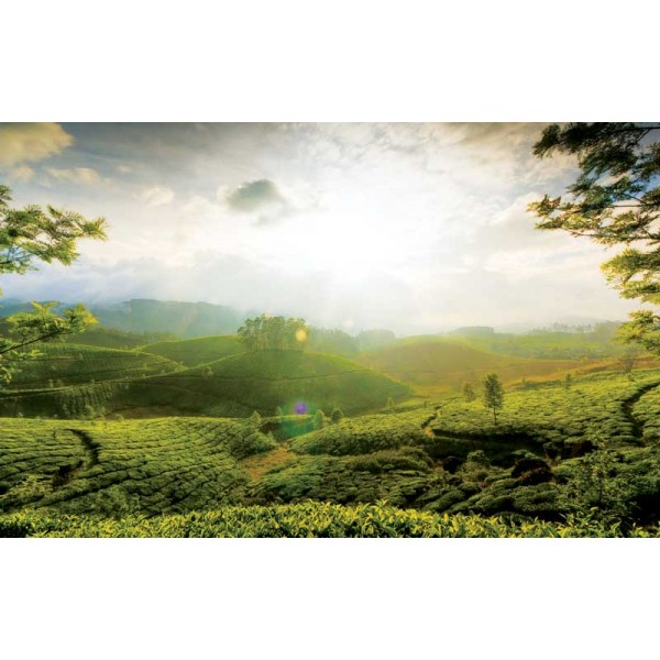 Tour Of Munnar And Thekkady 3N/4D