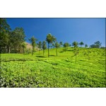 Munnar Tea Tasting And National Park Tour