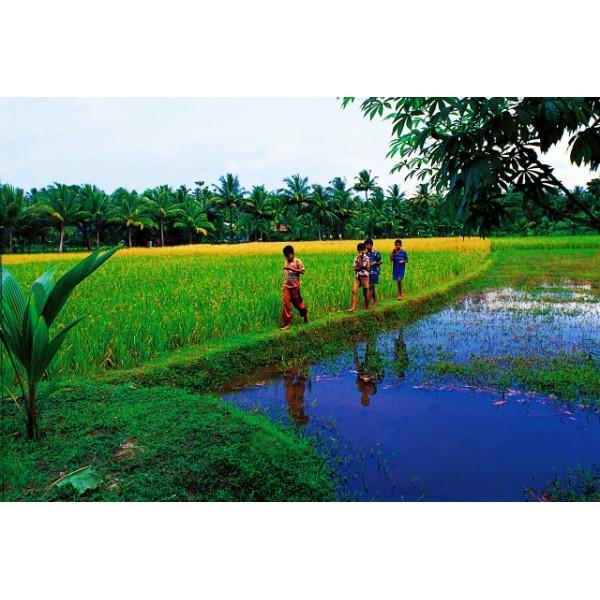 Tour Of Beautiful Kerala 3N/4D