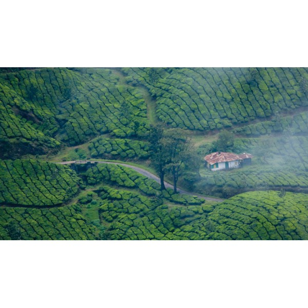 Half Day Tour In Munnar