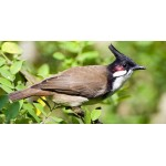 Bird watching tour in Nepal 7N/8D