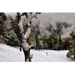 Snow Trek: Triund 2N/3D