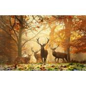 Wildlife (50)
