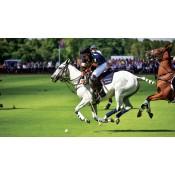 India Polo (0)