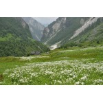 Valley of flowers & Hemkund Sahib Trek for Women 5N/6D