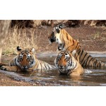 Corbett National Park-Mussoorie Tour 4N/5D