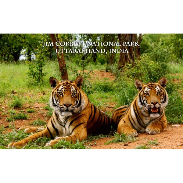 Tiger's Foot Prints 2N/3D