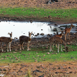 Tadoba Tiger Safari 2N/3D