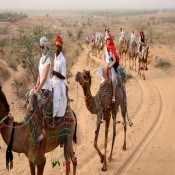 Camel safari (0)