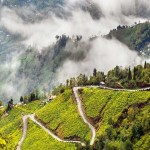 Darjeeling – The Queen of Hills 3N/4D