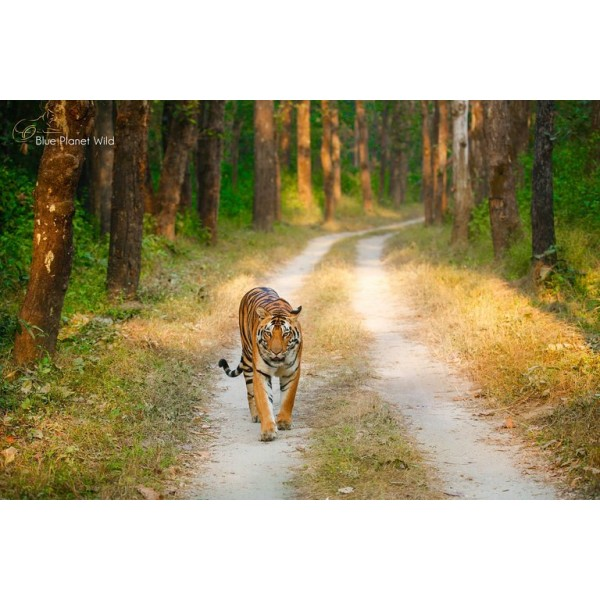Pench National Park 2N/3D