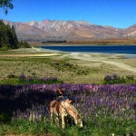Naturally New Zealand (Stay in Twizel ) 9N/10D