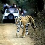 Tadoba Tiger Safari 2N/3D