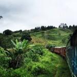 Sri Lanka Nature Tour 5N/6D