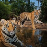 Royal Sunderban 3N/4D