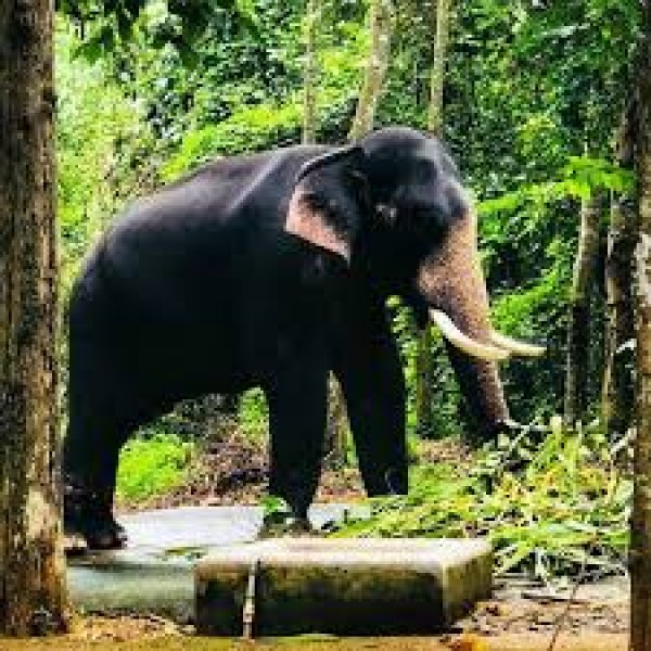 Wildlife Tour In Kerala 5N/6D