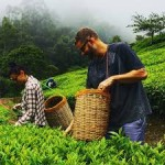 Half Day Spice Valley Tour In Munnar