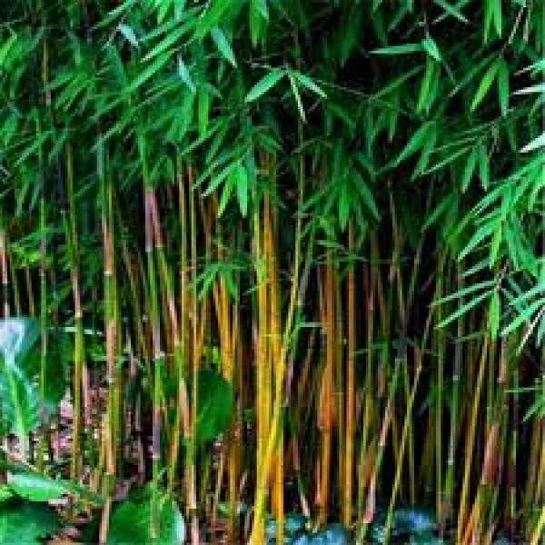 Bamboo Village Tour In Wayanad