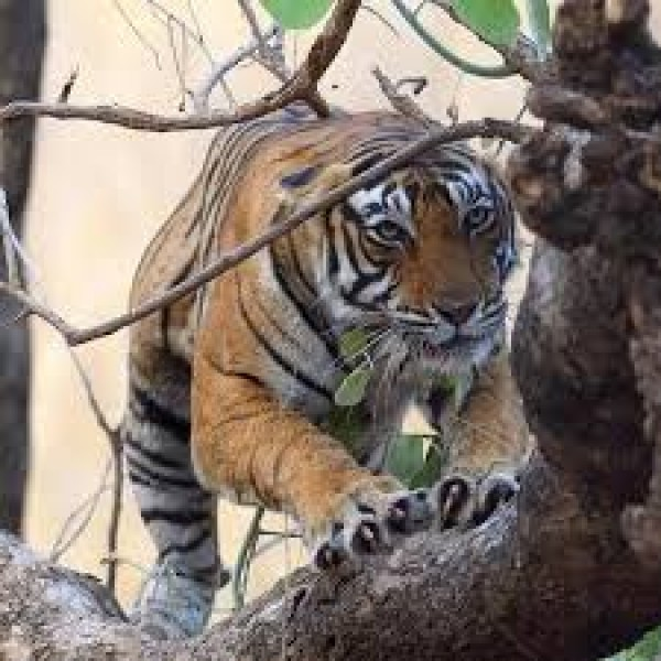 Ranthambore Weekend Tour 2N/3D