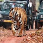 City And Wildlife Tour In Rajasthan 3N/4D