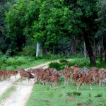 Wildlife Safari at Nagarhole National Park in Kabini