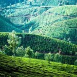 Full Day Tour In Munnar