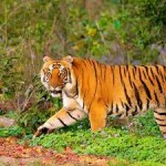 Chimmony Wildlife Sanctuary Trekking 1N/2D